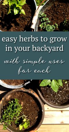 love all these herbs and the recipe ideas for each backyard herb garden ideas Easy Herbs To Grow, Growing Herbs, Vegetable Garden, Garden Plants, Organic Gardening, Gardening Tips, Garden Inspiration, Garden Ideas, Types Of Christmas Trees