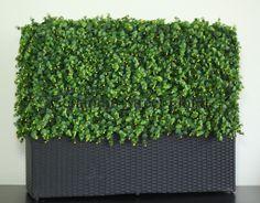 """Long Leaf hedge panel inside 48""""x12""""x12"""" wicker planter."""