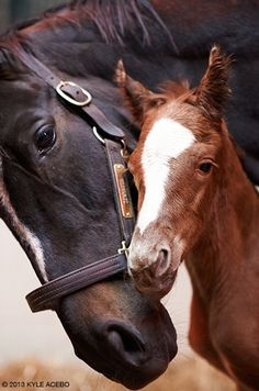 *the great Zenyatta, and her 2nd colt, '13z'