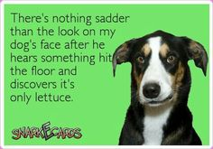 LOL! This fits my dog. She is so disappointed when she sees its some kind of vegetable that hit the floor.