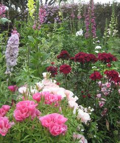 Sherman Library & Gardens: Gardens has collections by geography from around the world that parallel those at UC Botanical Garden. However, they do not have the same strict policy about wild-collected material with provenance.
