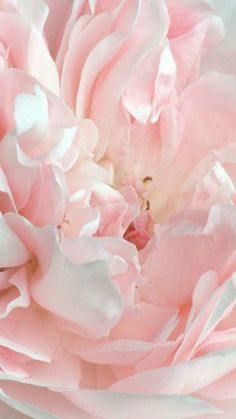 ~ soft pastel pink flower ~