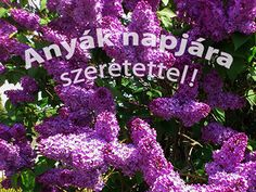 Anyák napjára szeretettel Wallpaper Gratis, Mother's Day Photos, Holiday Wallpaper, Happy Mothers Day, All The Colors, Gifts, Free, Curtain Shop, Inspiration Quotes