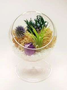 Terrariums are a great way to brighten up a room. This comes in a kraft gift box to give to that special someone. The air plant needs water once a week and bright indirect light. They will do well in office lighting or near a bright window. Perfect plants for the active modern lifestyle! Includes the following: 1 - Glass Pedestal 5 x 4, 3 opening 1 - Air plant 1 - Thistle Flower (dried) 1 - Purple amethyst crystal 1 - Mini White Rocks - Juniper (preserved) - Cream Reindeer Moss (preserved)…