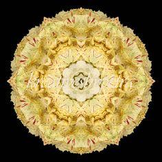 Mandala ''Salatmix''  kreativesbypetra  #mandala #inspiration #innreruhe #salat #salad Petra, Salad, Inspiration, Mandalas, Canvas, Biblical Inspiration, Salads, Lettuce, Inspirational