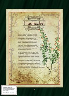 Hauhechel - Another! All About Plants, Real Plants, Healing Herbs, Medicinal Plants, Diy Projects For Beginners, Animal Magic, Greenhouse Gardening, Fantastic Art, Book Of Shadows