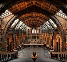 Natural history museum of London.