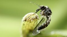 Genf WHO erklärt globalen Zika-Notstand für beendet (Reuters/J.-C. Ulate)
