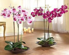 Orchids with beautiful flowers in various colors are wonderful house plants for elegant and sophisticated home decorating Elegant Flowers, Exotic Flowers, Beautiful Flowers, Nice Flower, Beautiful Gorgeous, Orchid Flower Arrangements, Orchid Centerpieces, Orchid Pot, Orchid Plants