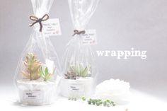 プチギフト - ココットタニク - ウエディングギフト 多肉植物 プレゼント サボテンミサイル