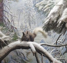 Abert's Squirrel diorama at the American Museum of Natural History. See their fun video channel here: https://www.youtube.com/channel/UCMkybZyI_B-xgkLQo_eCQ_w