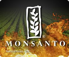 Monsanto hypocrisy: GMOs supposedly identical to natural crops on safety, but unique for patent enforcement
