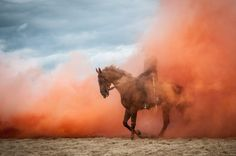 Stress test Photo by Diana Bloemendal — National Geographic Your Shot