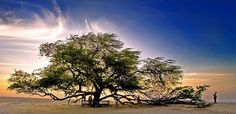 "There is a tree in Bahrain that has earned the title Shajarat-al-Hayat, which translates to ""the tree of life."" This tree stands alone in the heart of the vast desert of Bahrain, and has been thriving in that harsh climate for over 400 years. There is no another sign of vegetation for miles, and no apparent source of water in the vicinity."