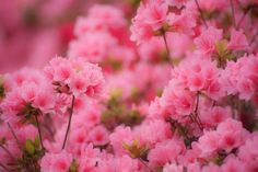 Pink Flowers :)   #Inspiredvday #xoxoinspiredsilver