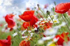 Znalezione obrazy dla zapytania buchete de flori la multi ani