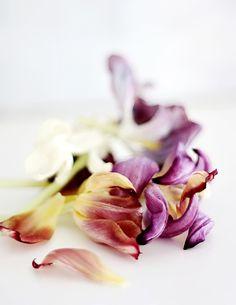 Still life de flores casi marchitas con una luz y colores fantasticos