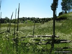 Askalan keto, a beautiful traditional Finnish field.