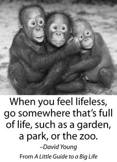 When you feel lifeless, go somewhere that's full of life, such as a garden, a park, or the zoo. -David Young #ALittleGuide