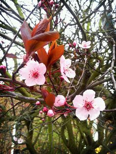 All the trees are blossoming on my walk to work. Photo A Day, Bloom, Trees, Flowers, Plants, Tree Structure, Plant, Royal Icing Flowers, Wood