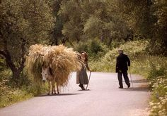 A typical road scene outside Petriti in southeast Corfu, Greece. Photo courtesy of Jillian Wareham