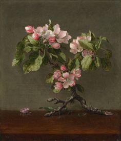 Apple Blossoms, 1873                                       Martin Johnson Heade