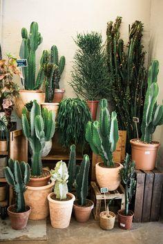 Indoor Cactus Garden, Cactus House Plants, House Plants Decor, Plant Decor, Indoor Plants, Cactus Cactus, Decoration Cactus, Decoration Plante, Cacti And Succulents