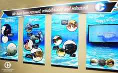 Check out CMA's Rescue, Rehab and Release wall to meet some of our past animal rescues and learn about their unique tales!