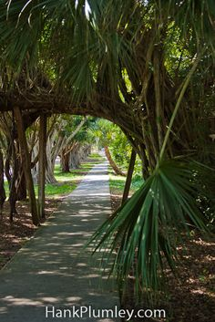The sidewalk on SE Bridge Road in Hobe Sound,Florida WE HAVE LIVED THERE. BEAUTIFUL ROAD. #photos #travel #tourism