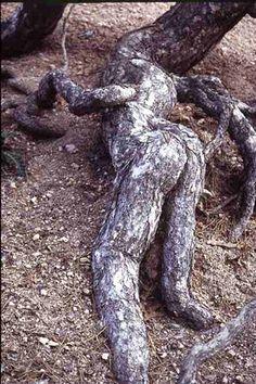 Human looking roots