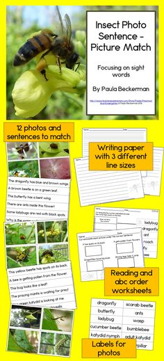 A complete literacy and/or science center! Twelve simple, factual sentences will teach your students about insects including butterfly, dragonfly, katydid, ladybug, praying mantis, wasp, beetles, ants and bumblebees. This is a great learning activity for kindergarten / first grade!  TpT$
