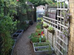 Growing Vegetables In Pots - How To Grow Shade Loving Edible Plants Veg Garden, Easy Garden, Garden Ideas, Garden Path, Garden Tips, Patio Ideas, Garden Inspiration, Growing Vegetables In Containers, Planting Vegetables