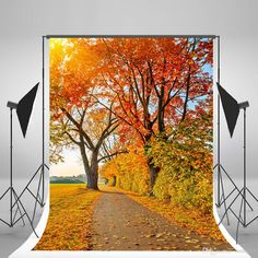 5x7ft150x210cm Natural Scenery Photography Backdrops Red Maple Leaf Autumn Backgrounds No Wrinkles for Weeding Autumn Backdrop Wedding Background Children Photo Backdrop&baby Background Online with $156.12/Piece on Fanny08's Store | DHgate.com