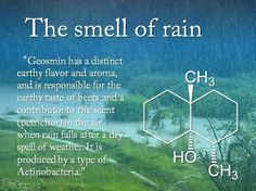 """PETRICOR"" is the scent of rain on dry earth,  ""GEOSMIN"" causes the characteristic smell of soil »  http://en.wikipedia.org/wiki/Geosmin"