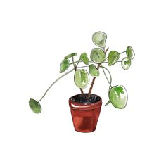 Pilea Plant by Good Objects