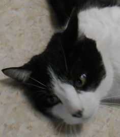 Almost Home Animal Shelter Quinnesec, MI - Cats