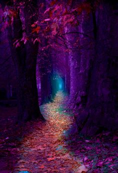 Enchanted forest – Miracles from Nature Fantasy Landscape, Dark Landscape, Forest Landscape, Landscape Photos, Nature Wallpaper, Landscape Wallpaper, Wallpaper Quotes, Fairy Wallpaper, Forest Wallpaper