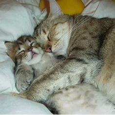 Here are some adorable pictures of cute kittens and cats! Baby Animals, Funny Animals, Cute Animals, Funniest Animals, Animal Babies, Cute Kittens, Cats And Kittens, Tabby Cats, I Love Cats