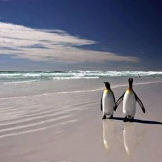 Penguins out for a stroll