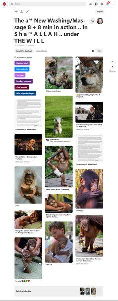 Screenshot: Pinterest Cute Monkey, Monkey Business, Blessings, Burning Man, Eid, Israel, Pray, Trainers, Blessed