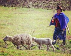 A shepherd and her sheep. From the Andean highlands in Ecuador.