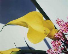 Psychic Friends Network: zzzze:   Nobuyoshi Araki, From: Flower, 1997