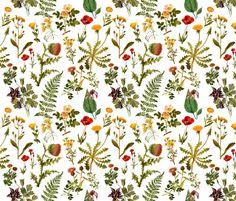 vintage botanical wildflowers sm. fabric by redbriarstudio on Spoonflower - custom fabric