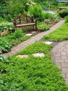 how to choose groundcovers and plants to use as lawn alternatives lawn landscaping and gardens