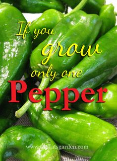 If You Grow Only One Pepper