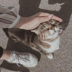These cute kittens will warm your heart. Cats are awesome companions. Animals And Pets, Baby Animals, Cute Animals, Cute Kittens, Cats And Kittens, Vsco, Cat Tags, Photo Chat, Cat Aesthetic