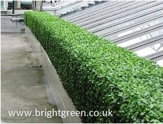 Artificial Buxus Hedges on a Roof Terrace