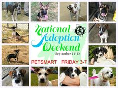 NATIONAL ADOPTION WEEKEND PETSMART LONGVIEW,TX SEPTEMBER 11 FRIDAY 3-7 PLEASE SHARE!!!  Come see us tonight at PetSmart and adopt your new best friend from Texas Star Rescue in Longview, Texas!!!! #TSRadopt #woof #helpsavealife #purr #dog #rescuedismyfavoritebreed #cat #texasstarrescue #adoptdontshop #puppies #kitties #meow #petsmart #chichi #pitbull #lab #terrier #GSD #lab #shihtzu #basset #ratterrier #bostonterrier #bordercollie #schnauzer #nationaladoptionweekend