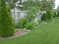 Backyard Idea-privacy fence bushes