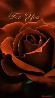 For you bewegende beelden<br> Beautiful Flowers Images, Beautiful Flowers Wallpapers, Beautiful Gif, Pretty Wallpapers, Flower Images, Beautiful Roses, Pretty Flowers, Romantic Images, Beautiful Friend